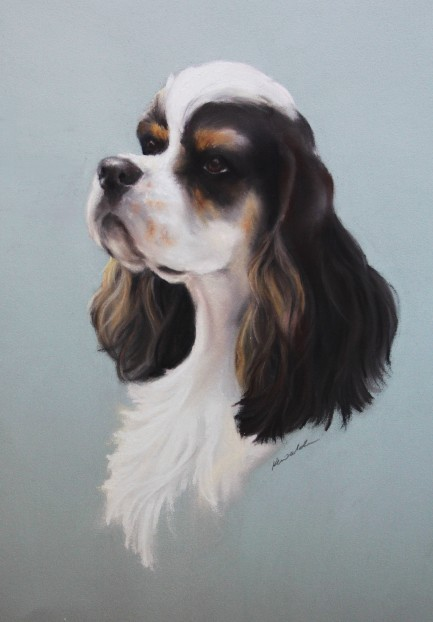 Tricolour American Cocker Spaniel